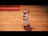 Тайная жизнь домашних животных / Трейлер №2 (дублированный)