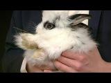 Невесты для графа: Владелец 1000 кроликов и замка ищет жену в России. От 24.03.16