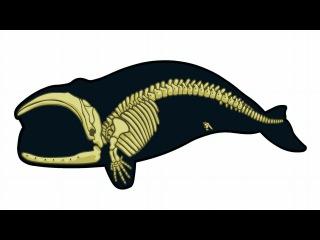 20.2 Эволюция IV - Доказательства часть II (9 класс) - биология, подготовка к ЕГЭ и ОГЭ