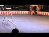 Цирк Шапито В Луге