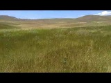 Армения, Банаван, травы на ветру