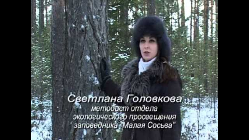 Заповедник Малая Сосьва