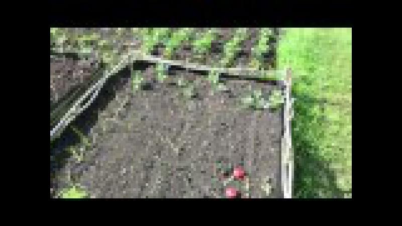 Как сделать высокую грядку из прутьев или веток 🌿 How to make Withe Raised Beds