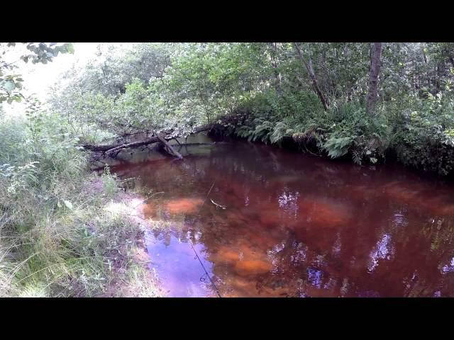 Река, которой нет на карте. Форель, Малина, Ирга, Белый гриб / brown trout fishing