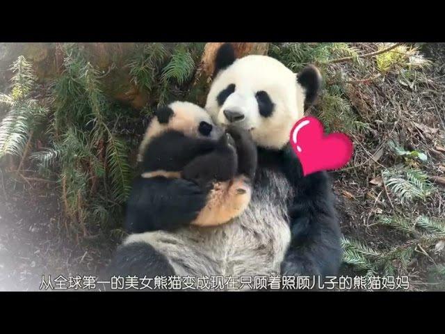 Su Lin and her 2014 cub ( Korean TV )
