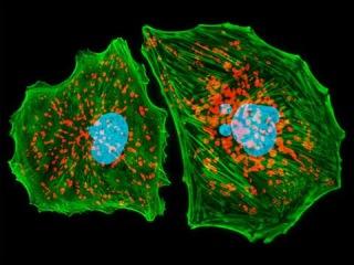 6. Строение клетки - органоиды (9 класс) - биология, подготовка к ЕГЭ и ОГЭ