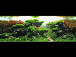 САМЫЕ КРАСИВЫЕ АКВАРИУМЫ. АКВАСКЕЙП (часть1). The most beautiful aquariums. Aquascape