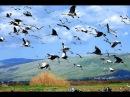 Возвращаются птицы (песня из фильма Джура - охотник из Минархара )