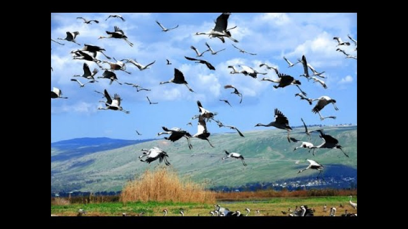 Возвращаются птицы...(песня из фильма Джура - охотник из Минархара)