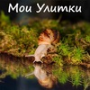 • MySnails.ru • - Мои Улитки °v°@_