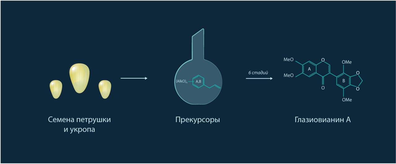 Российские ученые нашли медицинское применение укропу и петрушке