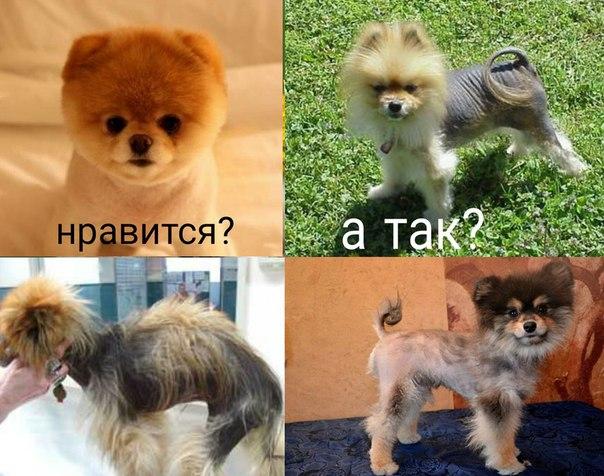 Алопеция у собак ASUNQjsrg-M