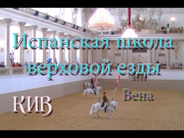 Школа верховой езды Вена. Лошади. Тренировка лошадей.