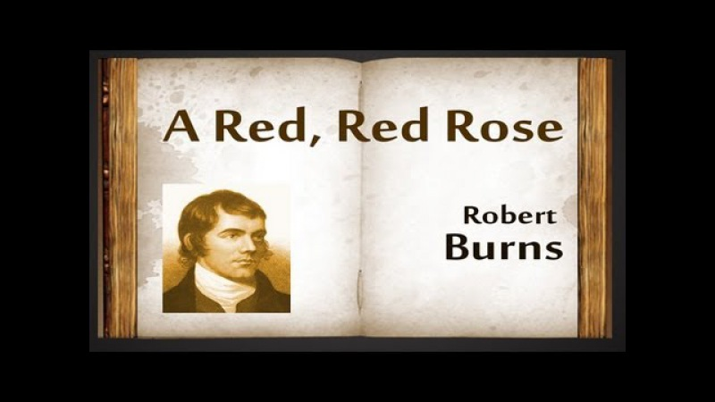 """a review of a red red rose by robert burns In what follows, we will present you the summary and composition of the poem """"a red, red rose"""" by robert burns summary the poem """"a red, red rose"""" by robert burns was initially published as a (."""