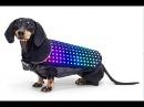 Интересные гаджеты для домашних животных, ваши кошки и собаки будут довольны.