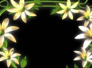 Flowers frem Premium HD Video Background Motion graphics animation Free Download HD