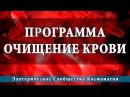 Космоэнергетика Программа очищения крови Школа Космомагов И. Андреева
