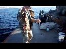 ловля троллингом в черном море