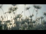 СОБЕРУ РОССИЮ ПО РОСИНКЕ..- Надежда КРЫГИНА, слова-Дмитрий ДАРИН