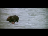 The Bear (LOurs) 1080p HD