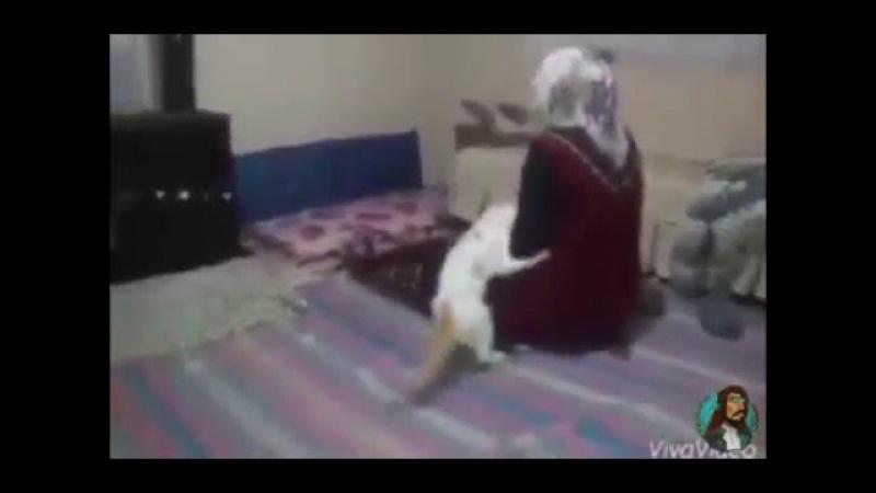 Namaz Kılan Teyzeye Rahat Vermeyen Kedi