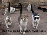 Приколы с животными!  Смешное видео
