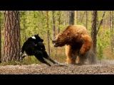 Охота на медведя. Bear Hunt.