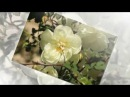 Белая роза автор работы НАДЕЖДА ФЁДОРОВА
