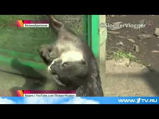Выдра, обитающая в одном из зоопарков Бирмингема, стала звездой интернета.