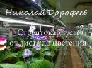 Стрептокарпусы от листа до цветения Н Дорофеев