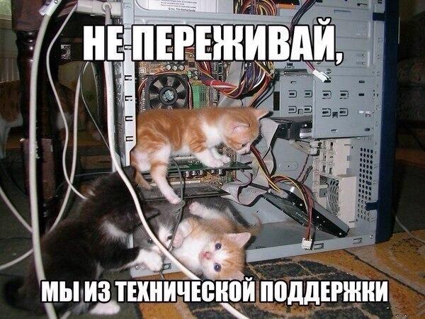 Котята из техподдержки
