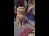 #котговорит#котповторяет#разговорскотом#говорящий кот#злой кот#кот#котик#злодейский кот##смех#ржач#прикол с котом
