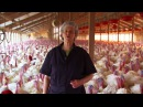 Turkey Farm Processing Plant Tour Temple Grandin