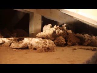 2.12. Утепление и пароизоляция каркасного дома, стен, перекрытий и мансардной крыши. Строй и Живи.