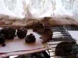 Домашние любимцы , бурундуки