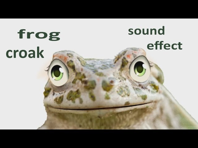 The Animal Sounds Frog Croak Sound Effect Animation