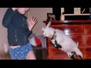 Funny Video | Crazy Goat attack | Real Life Mountain Dew attack Goat Review