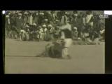 Старое видео (кетч-дог и полосатая гиена)