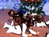 танец мартышек