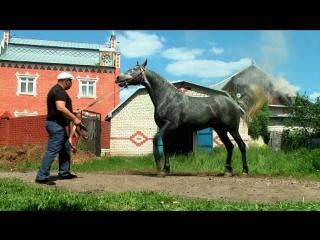 конное хозяйство нижний новгород  александра леонидовича продажа лошадей орл рыс и влад тяж