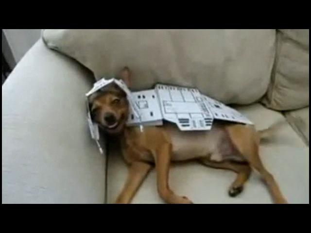 Собака-танк из звездных воин