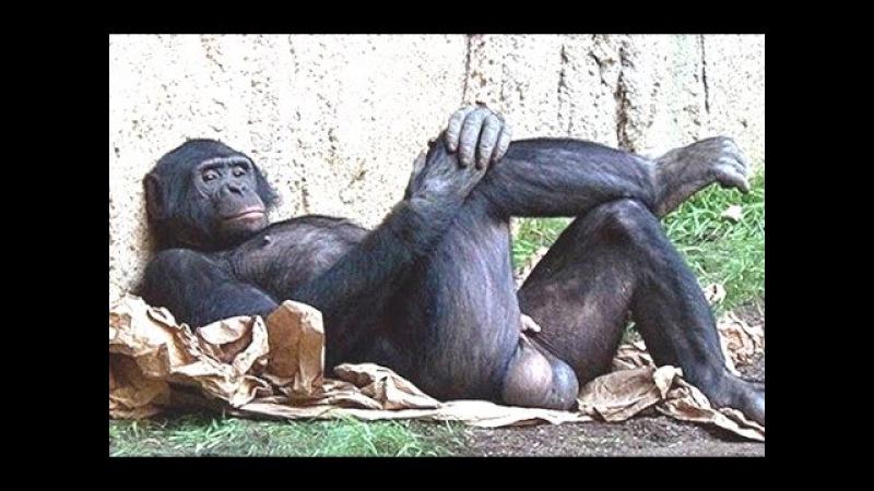Funny Animals Behaving Like Humans Videos Compilation 2015