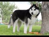 Топ 10 самых сильных собак в мире