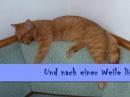 ♩ ♪ ♫ ♬ Meine kleine Katze Text Music ♪ ♫ ♬ by Ken Sawatzky