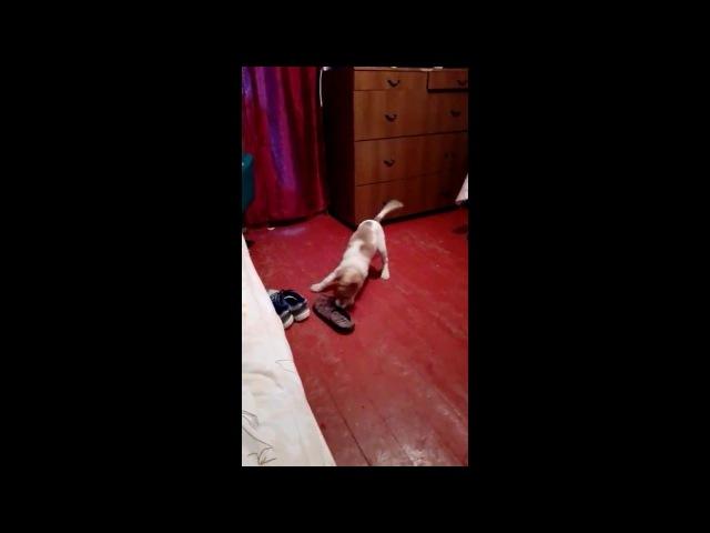 Funny and restless dog.Smart dog.სასაცილო და მოუსვენარი ძაღლი.ჭკვიან