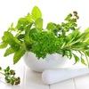 Агривер Фреш- Импорт и продажа свежей зелени
