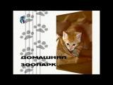 Доберман. Семейство кошачьих. Домашний зоопарк