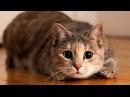 Дикий нрав кошек. Познавательное видео.