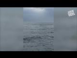 Откуда олень посреди океана