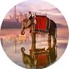 Королевская Индия верхом на слоне